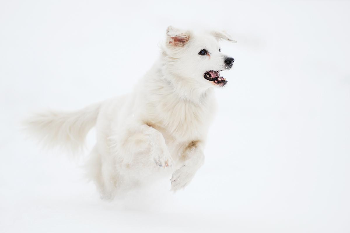 Hund_Action_Schnee