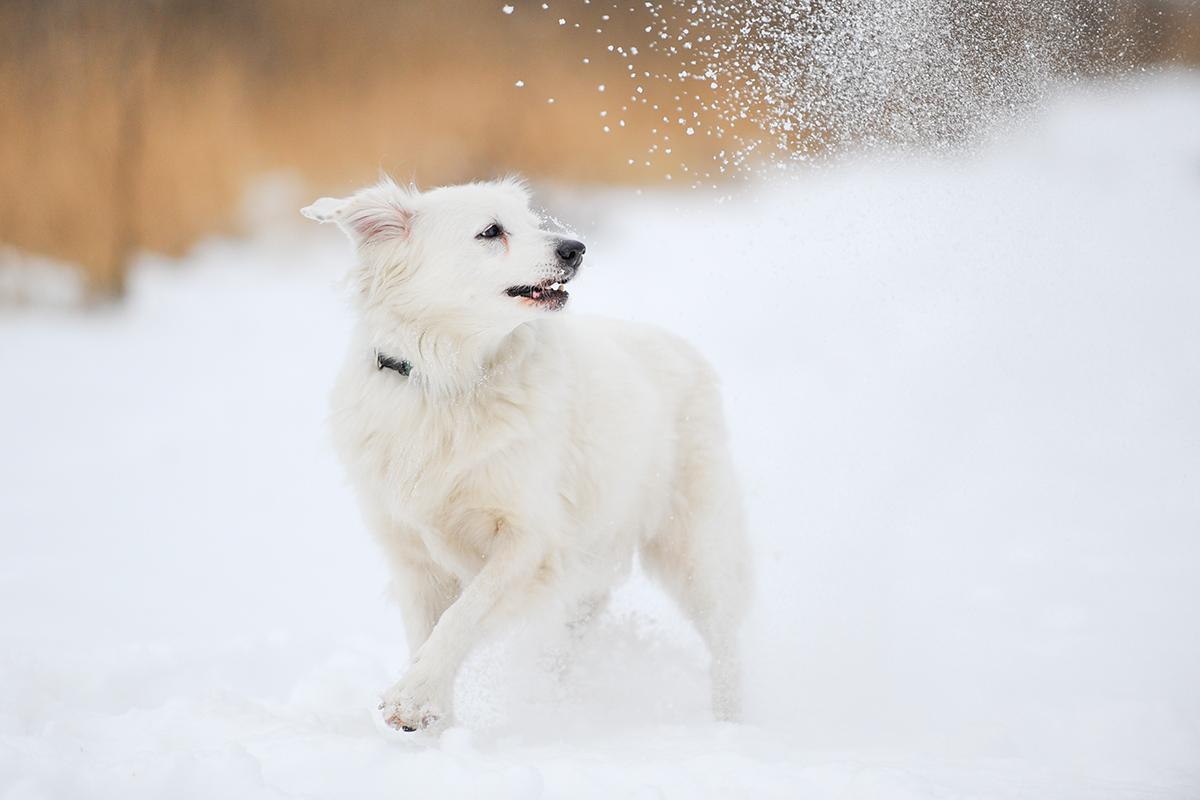 Hund_Action_Schnee02