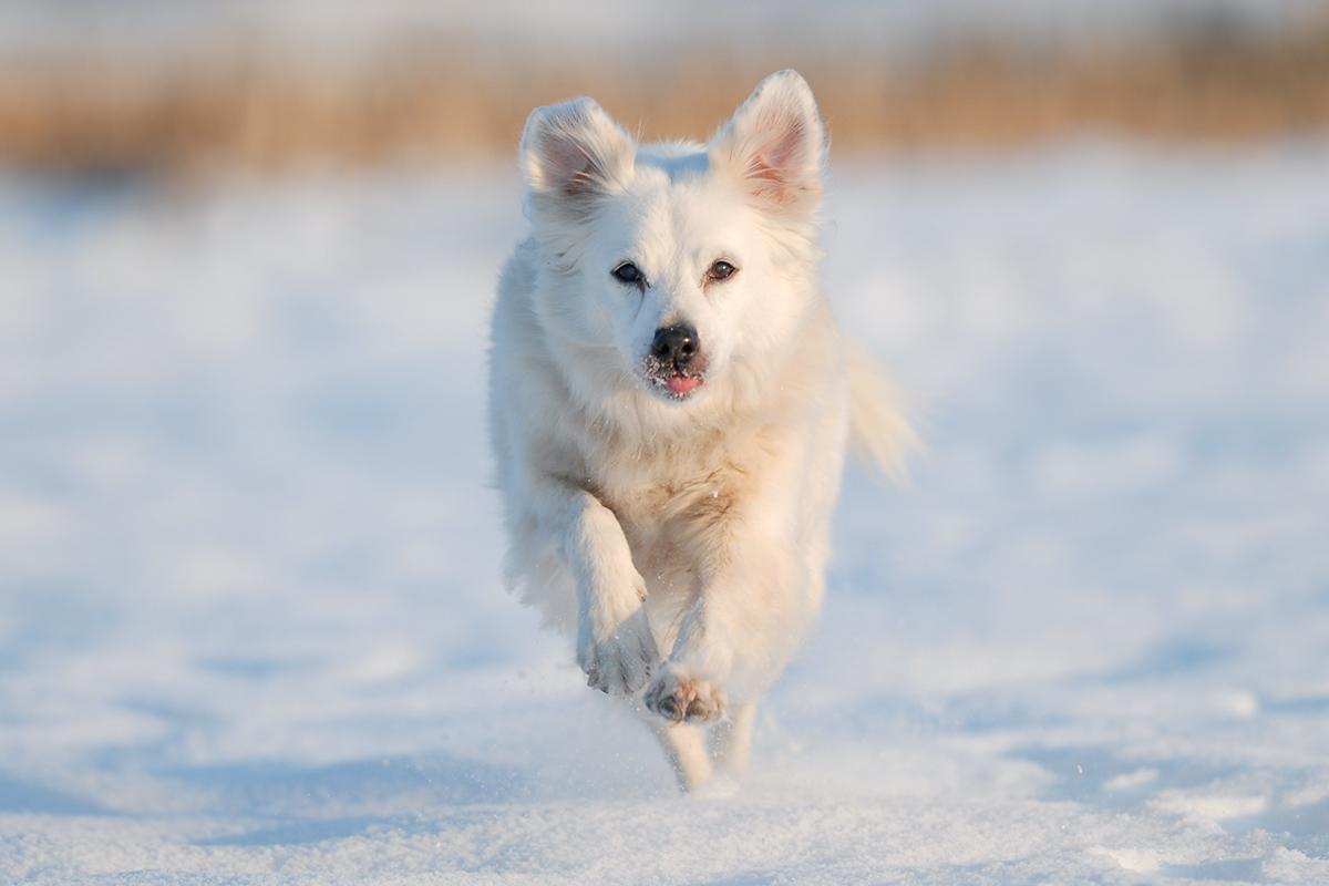 Ein Hund rennt direkt auf die Kamera zu