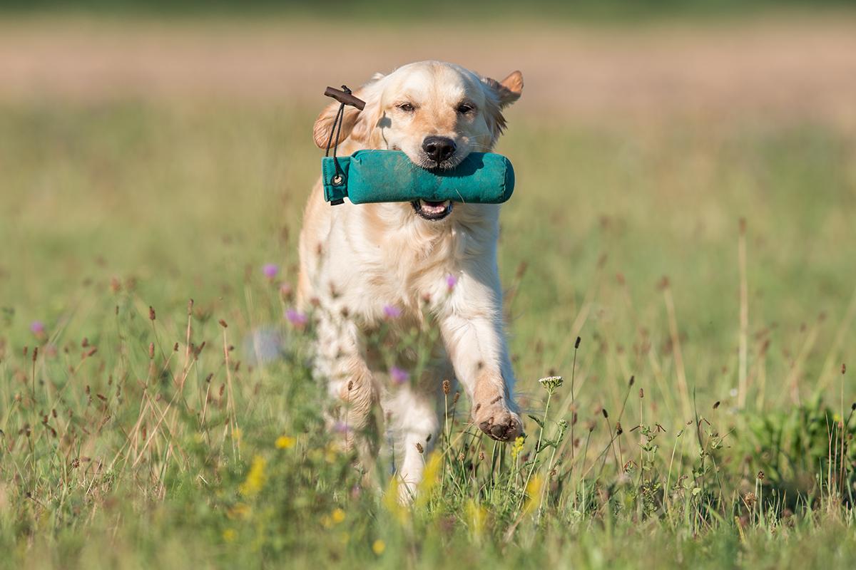 Hundefotos-Action04