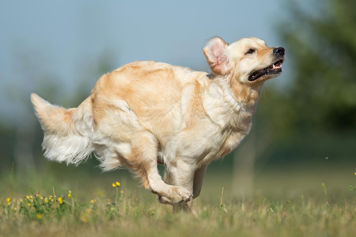 Hunde_fotografieren01