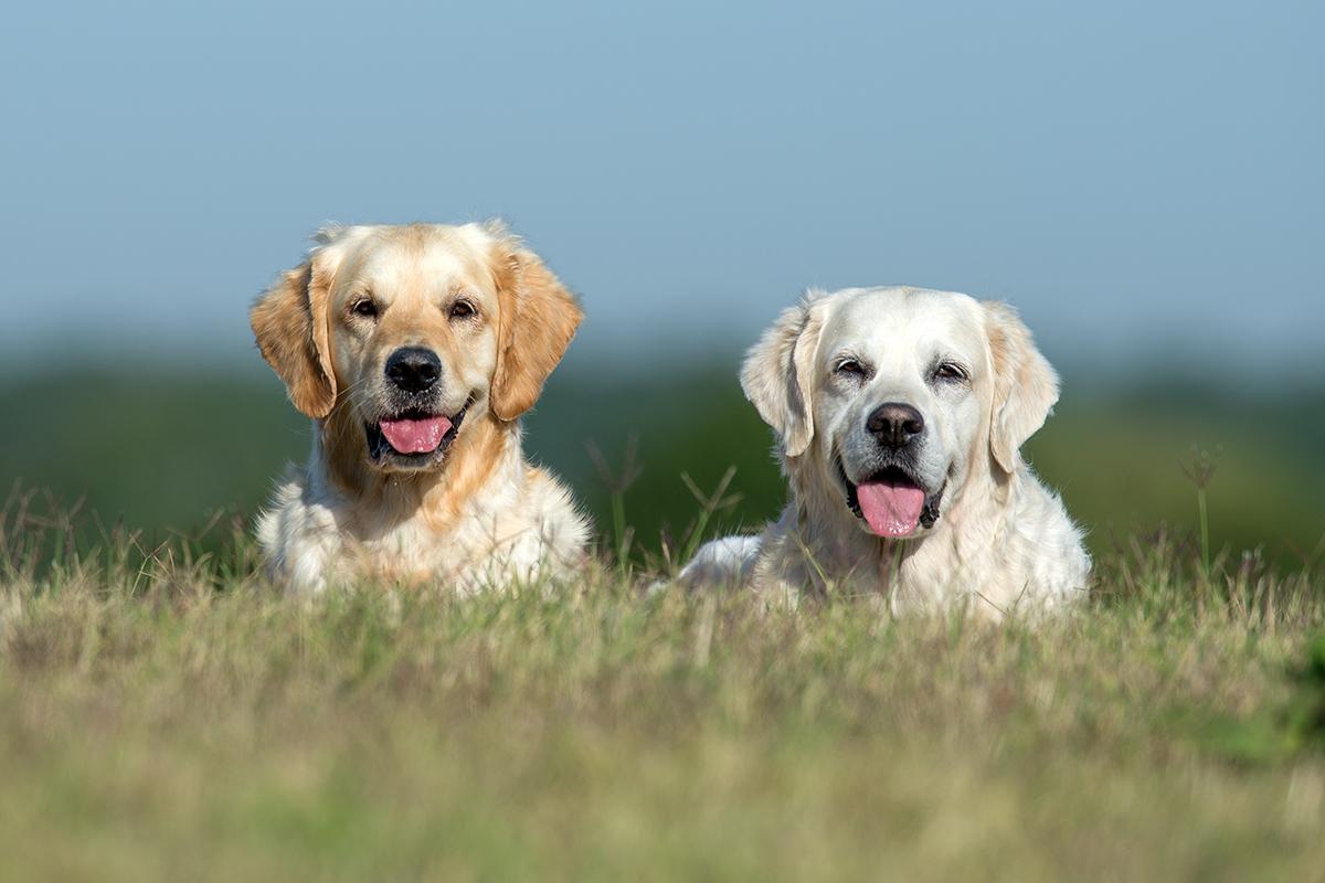 Hunde_fotografieren02