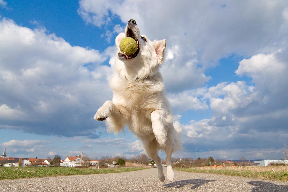 Hunde_fotografieren05